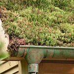 goutiere avec de la mousse sur la toiture d'une maison
