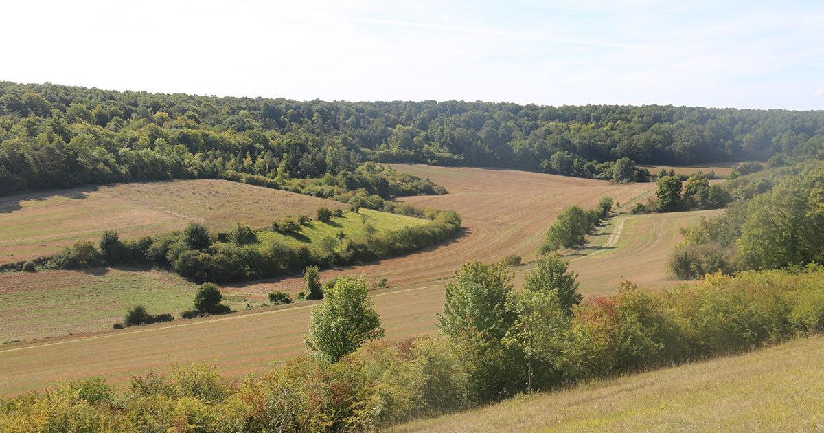 Arbres, champs, magnifique paysage de Boncourt